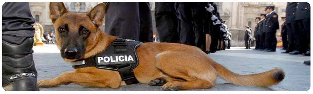 guia_canino